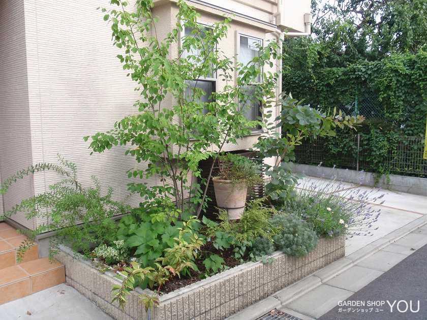 風に揺れる涼し気な植栽。