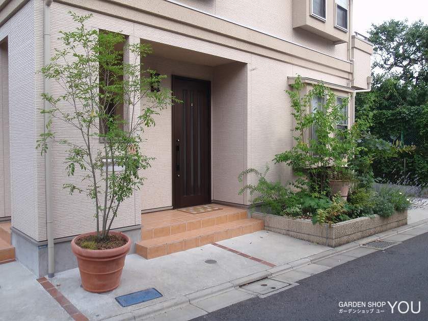 シンボルツリーのシマトネリコはコンテナ植栽で。