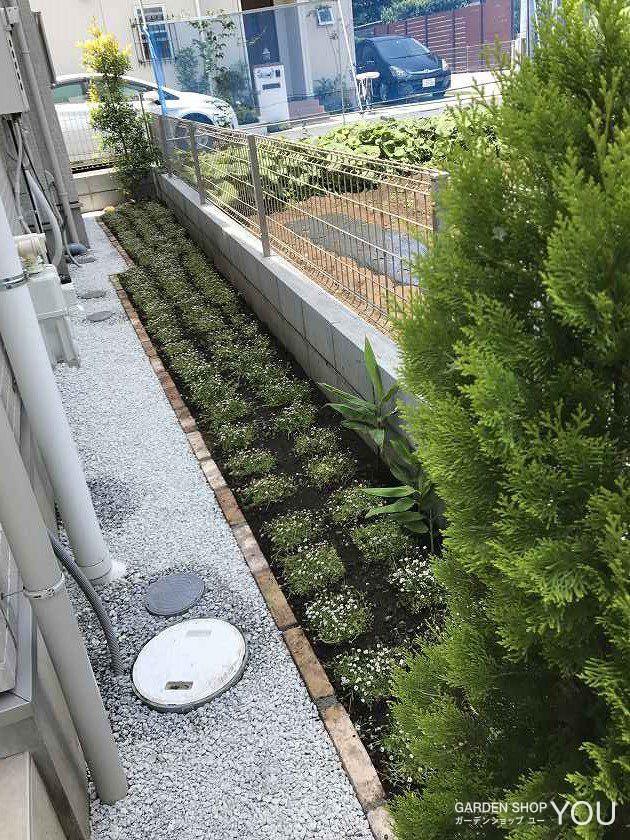 砂利と見切り、ヒメイワダレソウを植えました。