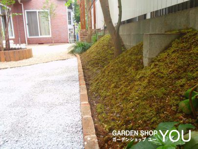 立ち上がった斜面に植えることによって苔の緑が美しく目に移りこみます。