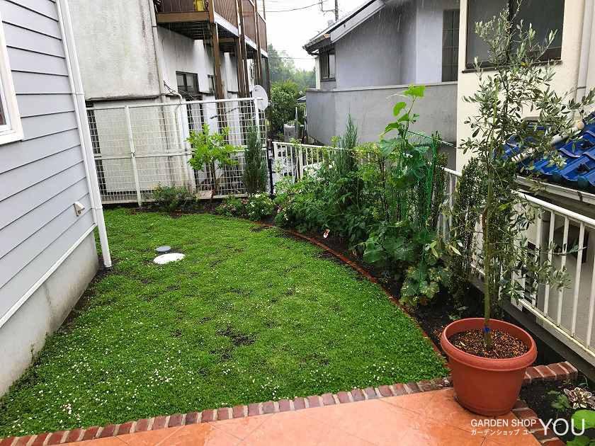 芝代わりに植えたイワダレソウが青々と茂って。