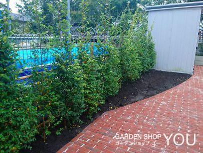 グリーンと赤の相性は抜群。 トキワマンサクを植えて。