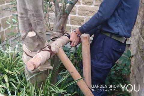 木を支える