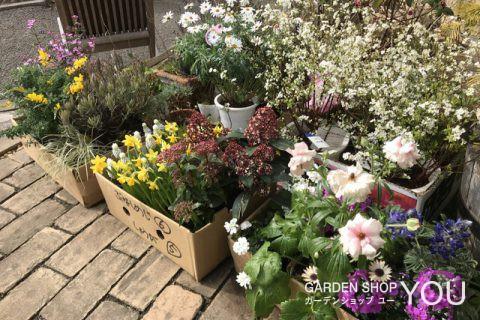 花壇を春色に